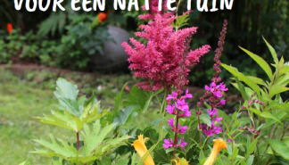 Natte tuin.png