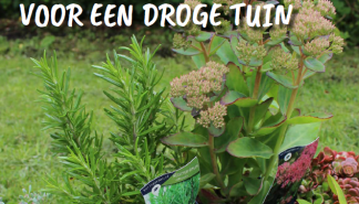 Droge tuin.png