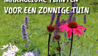 Zonnige tuin.png